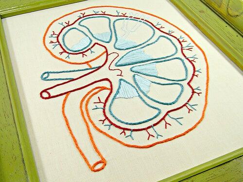 когато бъбреците ви не функционират правилно, винаги са налице промени в урината