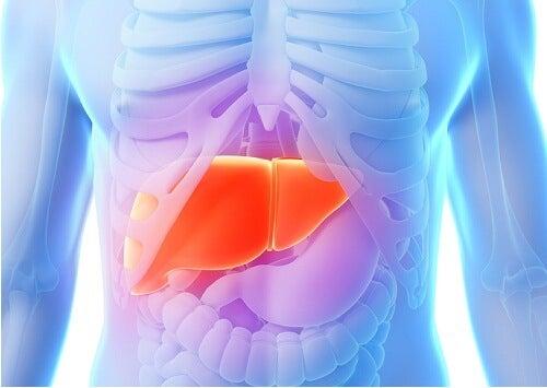 Приложение на артишок за черния дроб