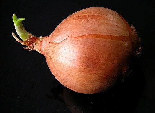 Един от най-добрите зеленчуци, част от диетите за отслабване е лукът.