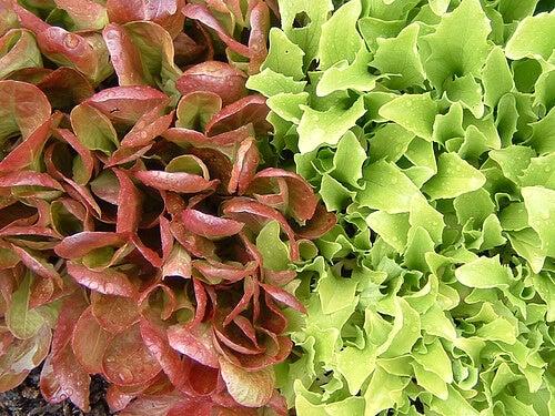 зелени листни зеленчуци като лечение на ендометриоза