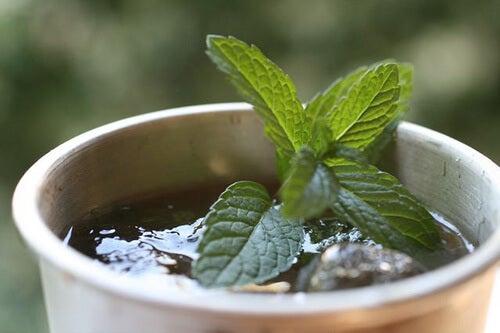 лечебните растения при гастроентерит - мента