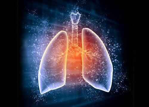 Диетата за детоксикация на белите дробове  ще продължи 3 дни