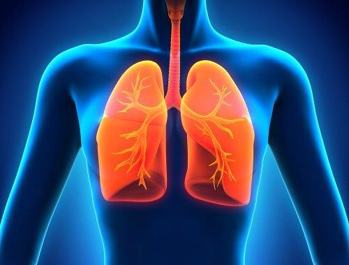 По време на процеса на детоксикация белите дробове трябва да почивате