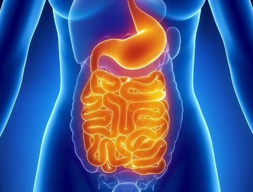 храносмилателната ви система ще ви е благодарна, ако пиете топла вода