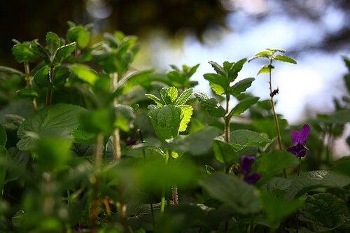 носния секрет - най-добрите билки срещу него