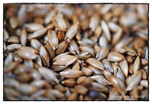 semena za ptici