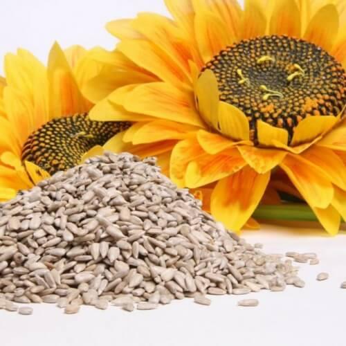 Слънчогледови семки за лечение на мигрена