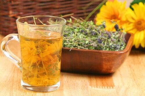 Лечебен чай от живовляк, копър и маточина за белите дробове