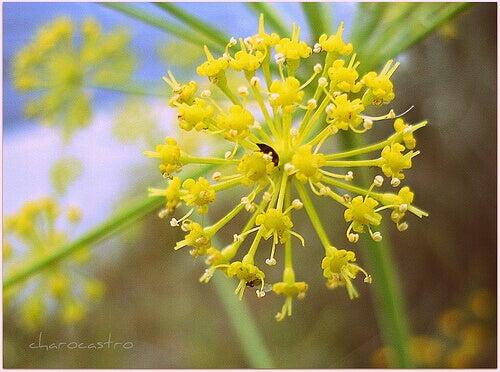 растения за отслабване: резене