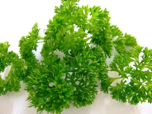 лечебни растения: магданоз