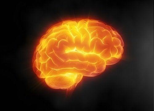 веществото ресвератрол е отличен щит за мозъка