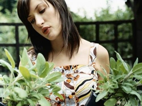 лечебни растения: салвия