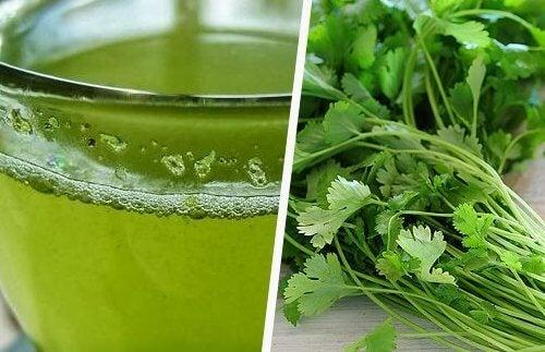 В кориандъра се съдържа изобилие от масла, полезни за здравето