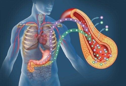 pankreas diabet