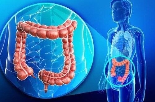Съвети за здраво дебело черво и отслабване