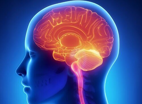 Ще защитите мозъка