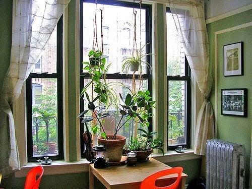 поддържайте дома си чист, за да избегнете появата на неприятните пъпки