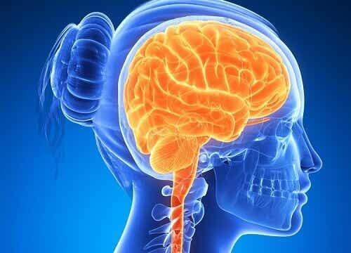 6 храни, които поддържат мозъка активен