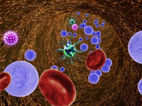 чревните бактерии влияят на имунната система много повече, отколкото се смяташе досега.