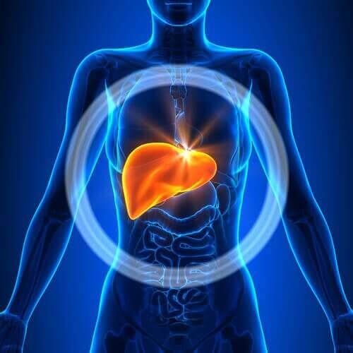 Отслабване и прочистване на черния дроб