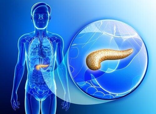 Как да детоксикирате панкреаса по естествен път