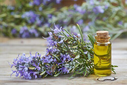 ефикасни растения с грижа за косата - розмарин против косопад