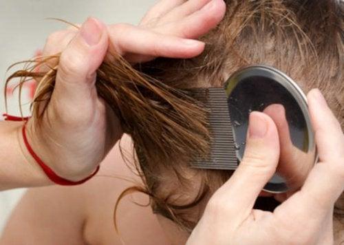 7 естествени начина за бързо отърваване от въшките и гнидите