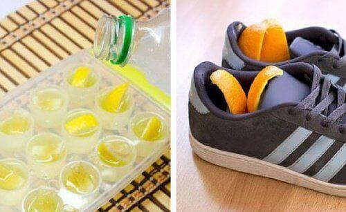 citrusova kora