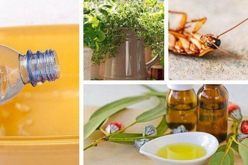 Прогонете насекомите от дома без токсични химикали