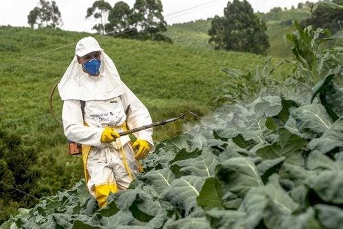 Пестицидите са химически продукти, които се използват за защитаот насекоми и др.