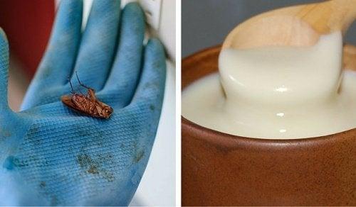 Унищожете хлебарките бързо и лесно