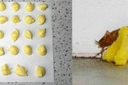 Унищожете хлебарките с борна киселина и яйца