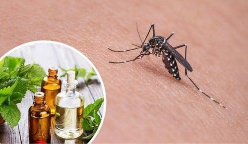 11 натурални средства, които гонят комарите
