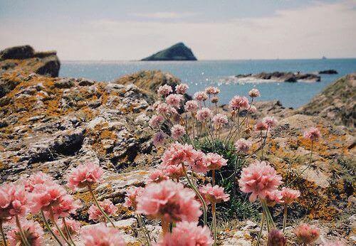 2-ostrov-cvetia