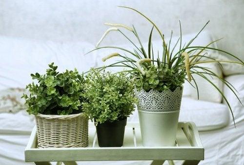 6 идеални растения за стаята ви