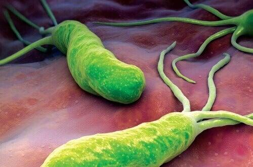 Тази бактерия провокира болка, подуване и диария
