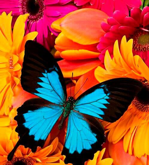 цветовете и природата