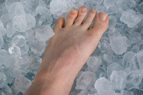 Лед срещубунионите