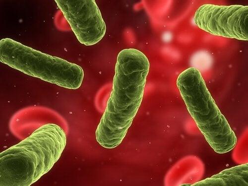 Причини за автоимунните заболявания