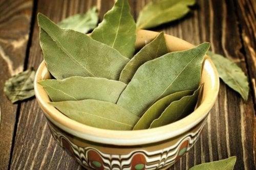 Как да използваме дафинови листа за успокояване на тревожността