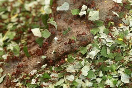Употреба на канела в градината срещу вредители