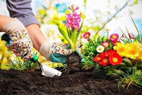 Лекуване на растенията в градината с канела