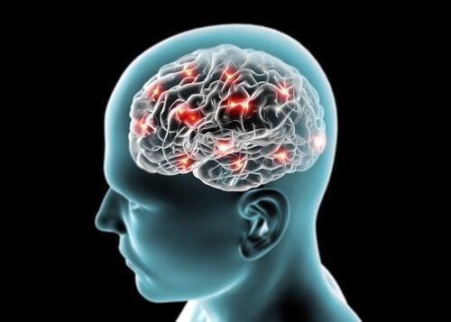 използването на канела стимулира мозъчната дейност