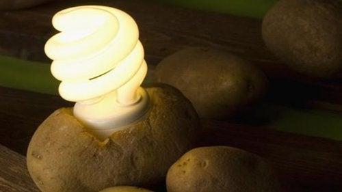 Как да си направите лампа от картоф