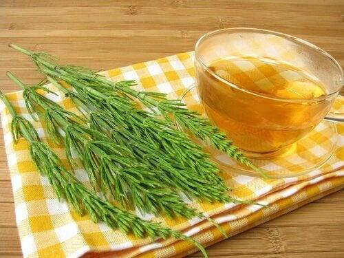 подобрете кръвообръщението си с чай от хвощ