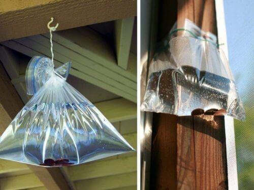 няколко торбички, пълни с водка в дома ви е интересен начин за прогонване на мухите