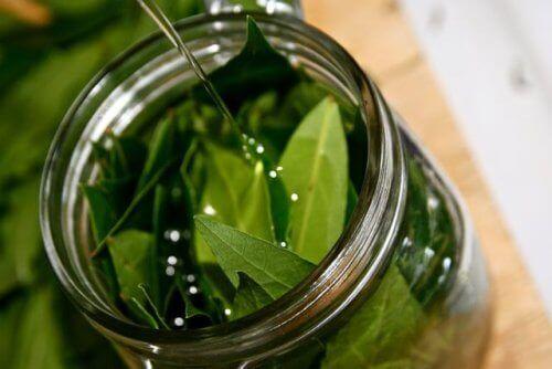Невероятните качества на маслото от дафинов лист