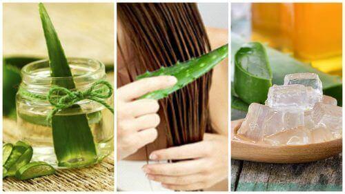 5 терапии с алое вера за заздравяване на косата