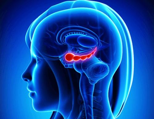 Орехите са храна за мозъка