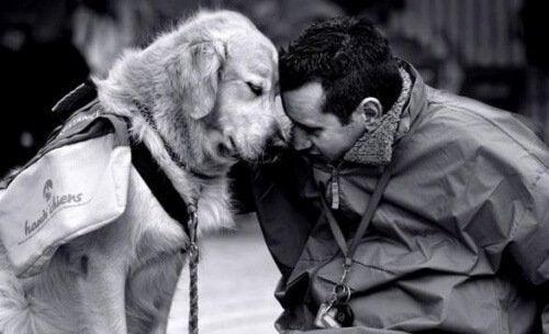 Вземете си куче, за да се преборите с носталгията